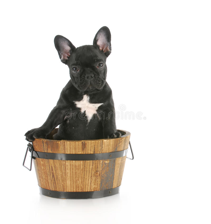 Puppy sitting in wooden bucket stock photography