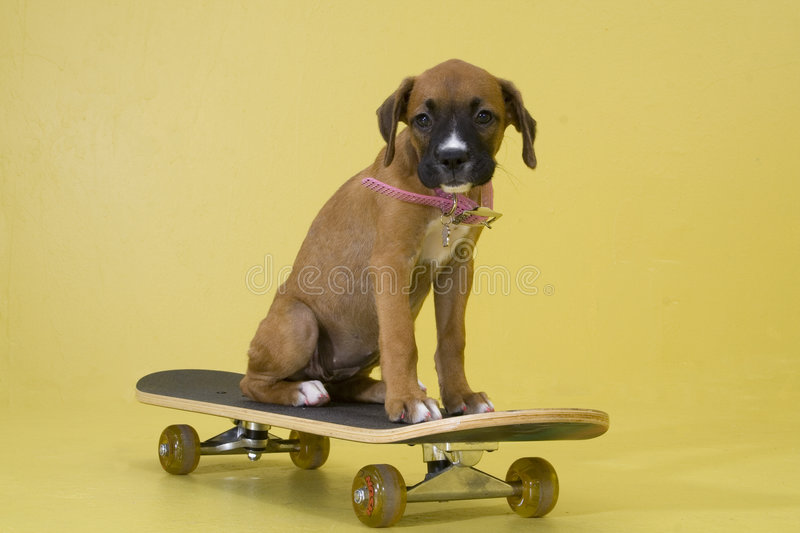 Puppy Skating stock photography