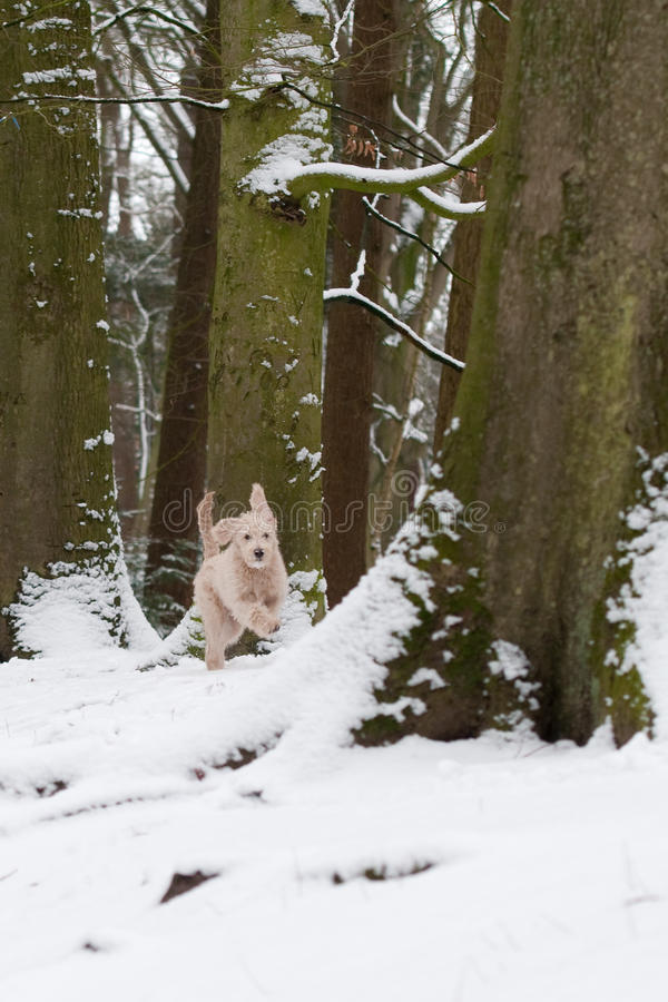 Download Puppy In Snow Stock Photo - Image: 29459280
