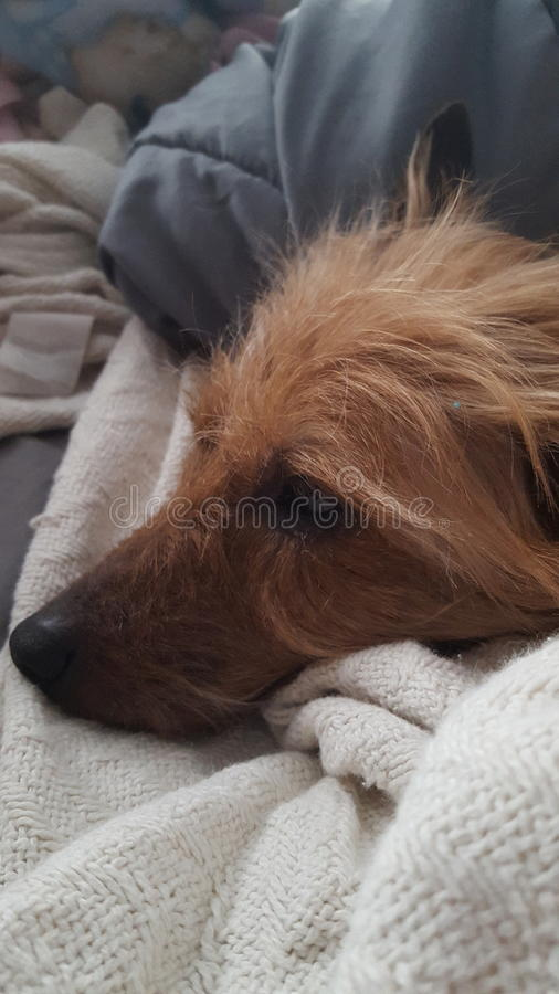 Puppy snuggles royalty free stock photos