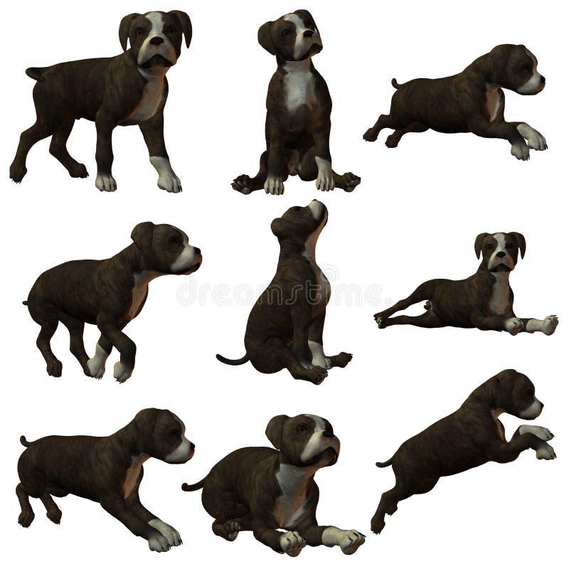 Puppy Staffordshire