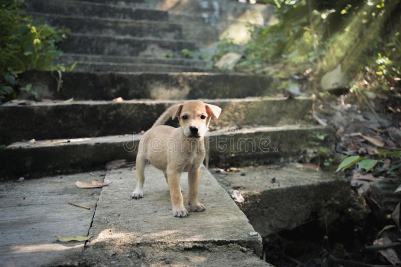 Puppy standing at ancient place. Canny puppy standing at old ruined and ancient place background stock photo