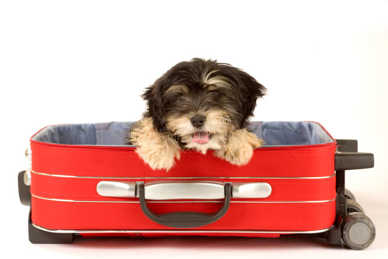 Puppy in the suitcase stock image