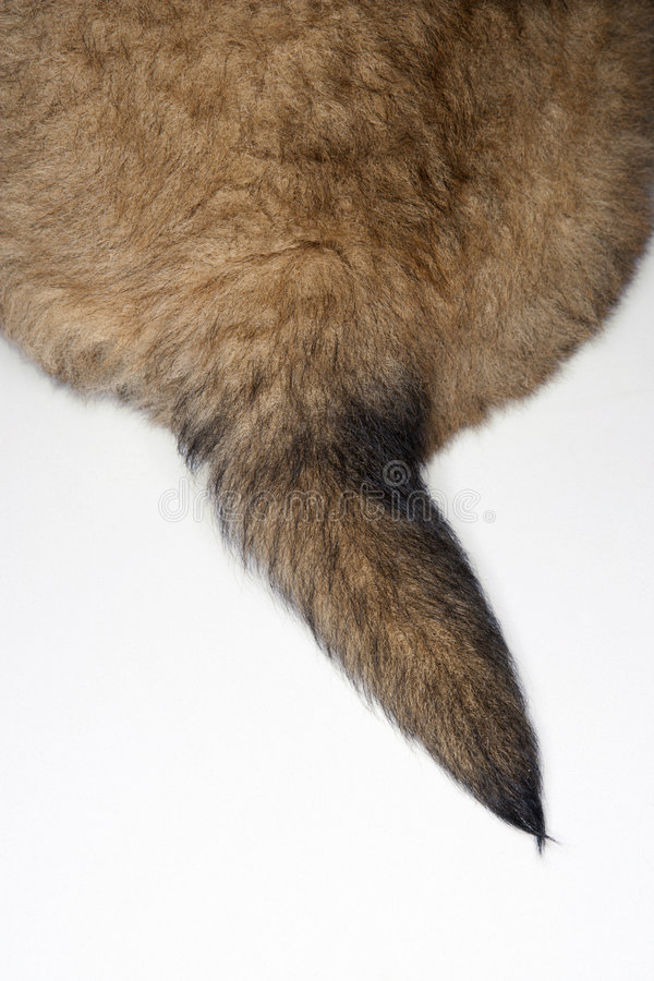 Puppy tail. stock photography