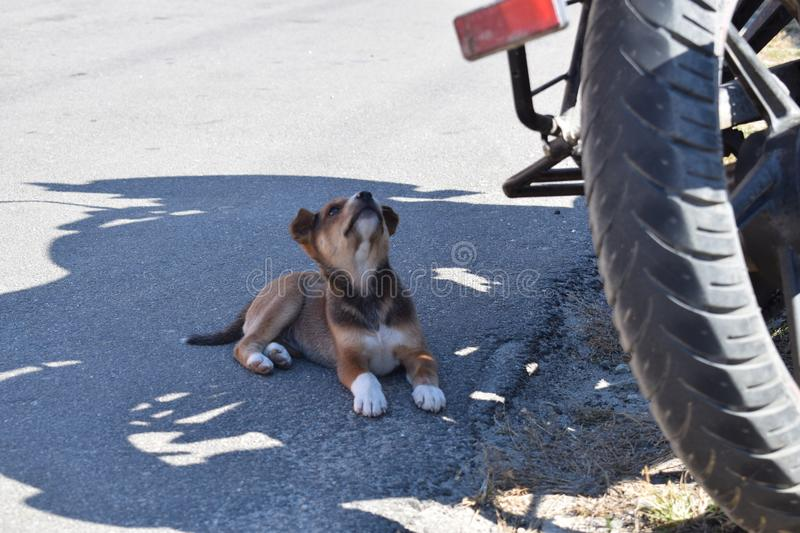 Puppy taking rest in shadow royalty free stock photo
