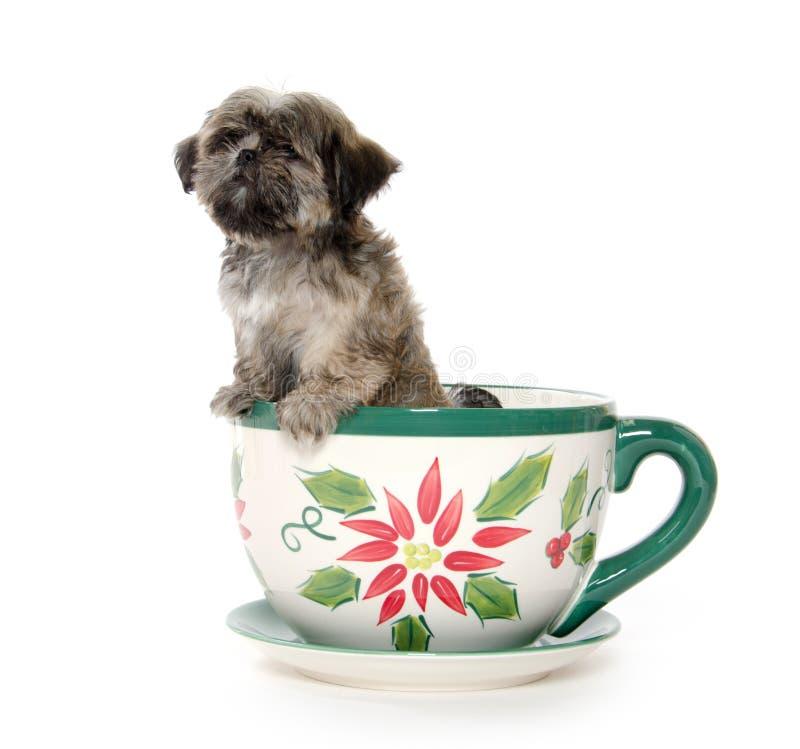 Puppy in theepot royalty-vrije stock afbeeldingen