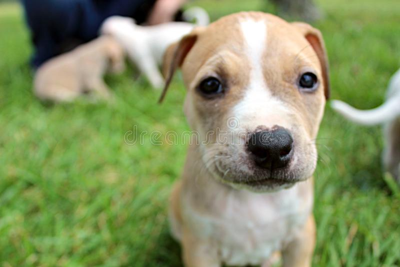 Puppy time stock photography