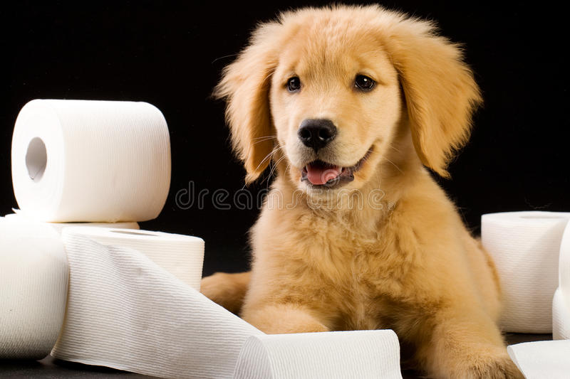 Puppy and Toilet Paper stock image