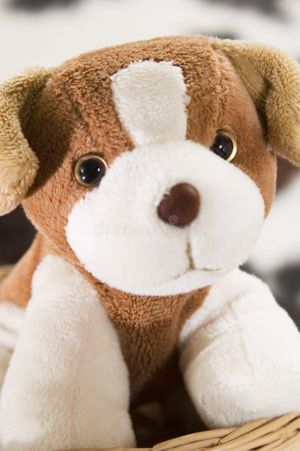 Puppy Toy Free Stock Photo