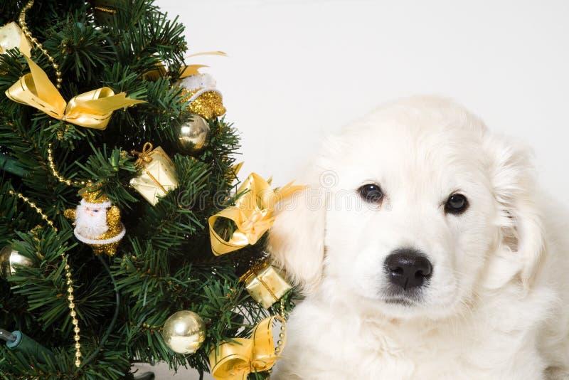 Puppy tree royalty free stock photography