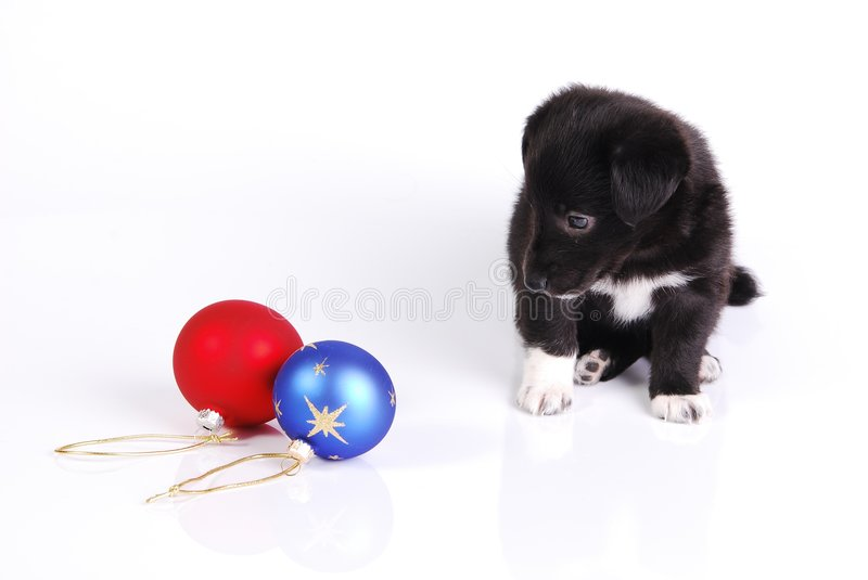 Download Puppy And Two Christmas Balls Stock Image - Image: 6947095