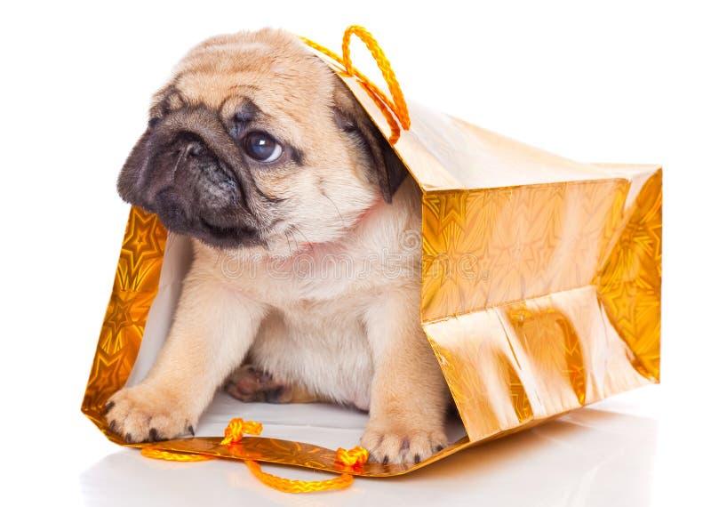 Puppy van pug in zakken stock afbeelding