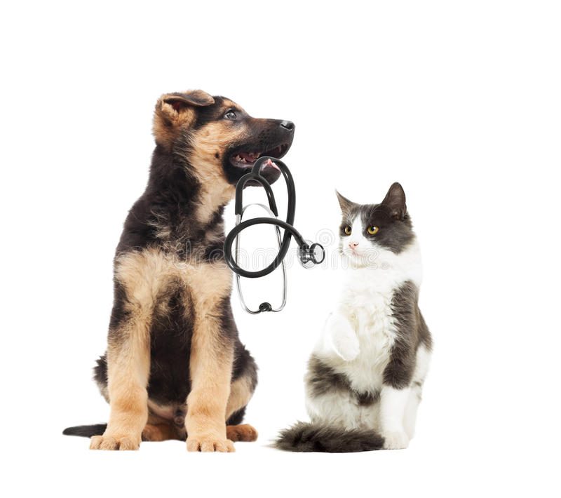 Puppy vet and cat and stethoscope royalty free stock image