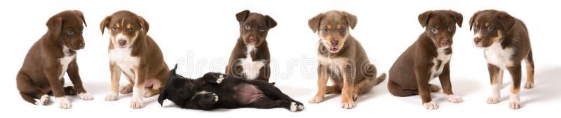 Puppy voeren-omhoog royalty-vrije stock afbeelding