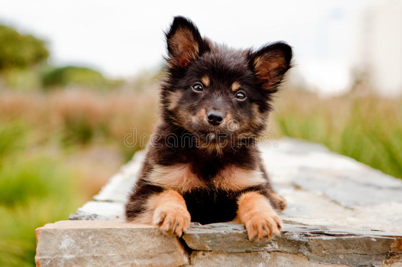 Puppy on wall. Cute fluffy puppy on a wall stock photography