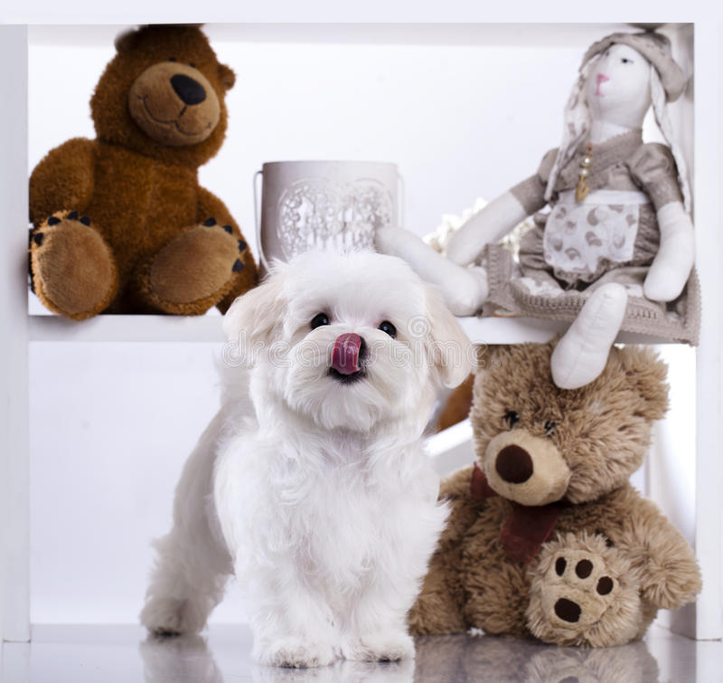 Puppy on a white background stock photos