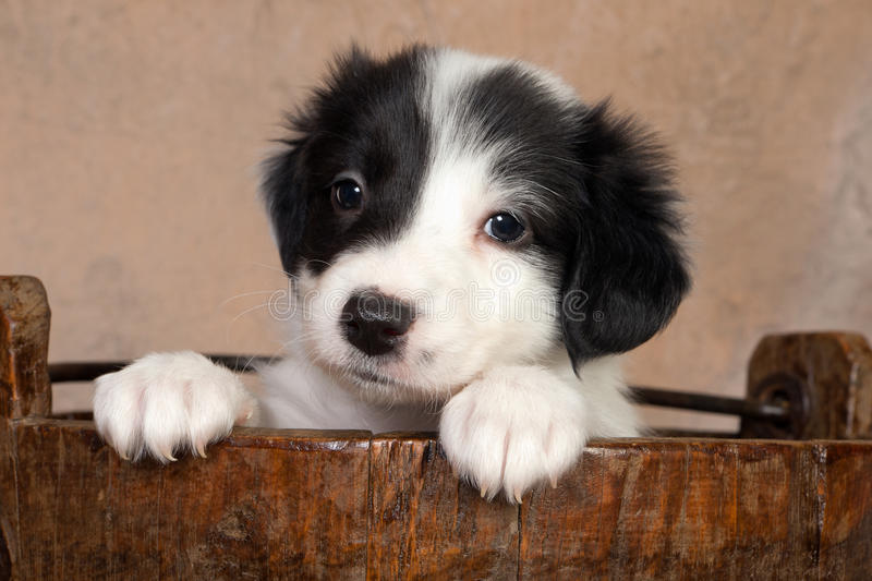 Puppy in a wooden bucket royalty free stock photo