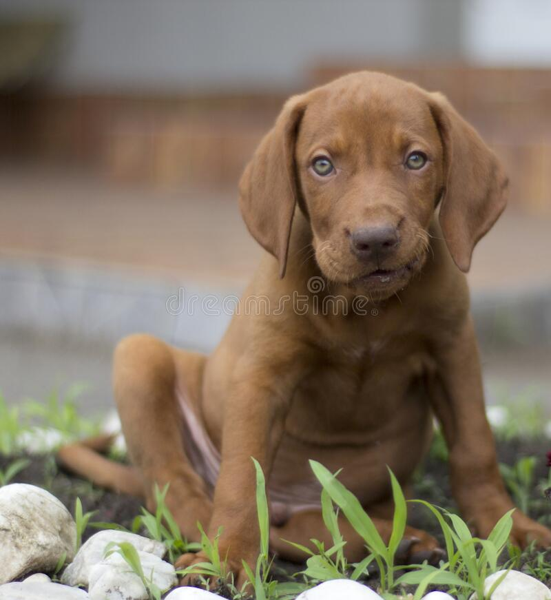 Puppy in the yard royalty free stock photos