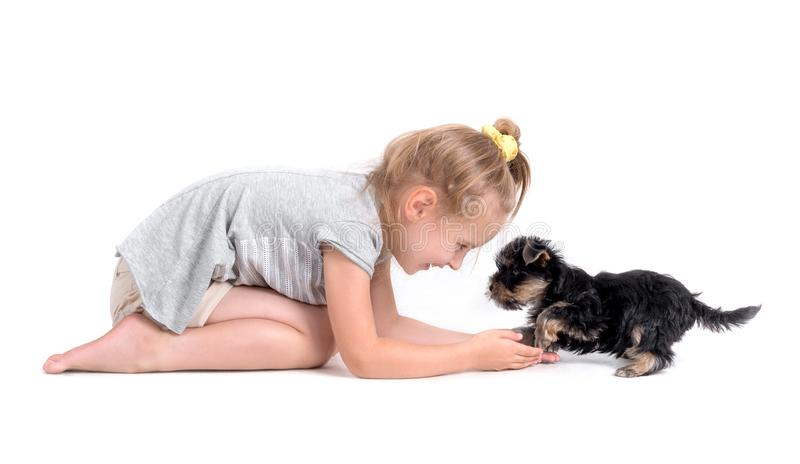 Puppy york and little girl. On a white background stock image