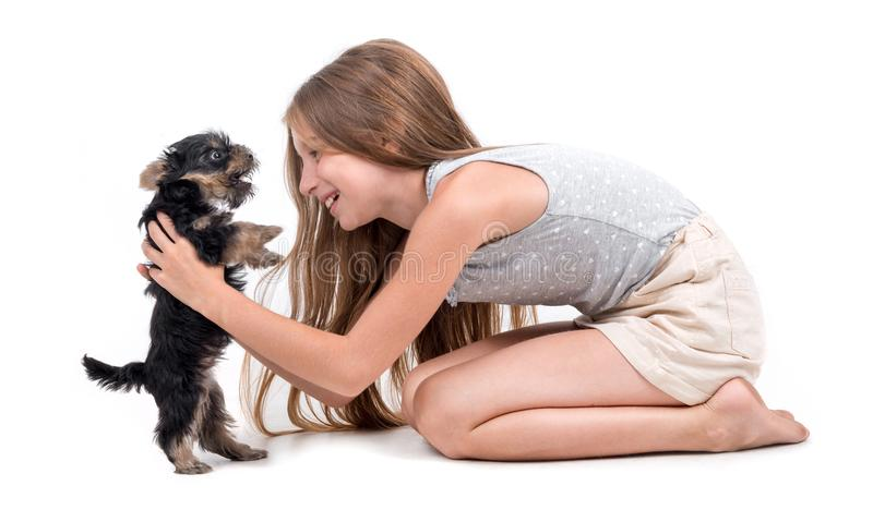 Puppy york and little girl. On a white background stock photography