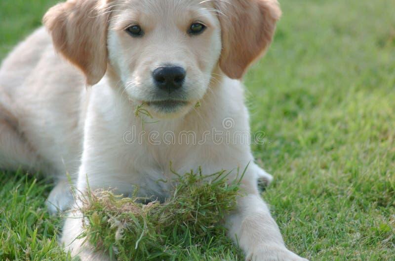 Puppy2 foto de archivo