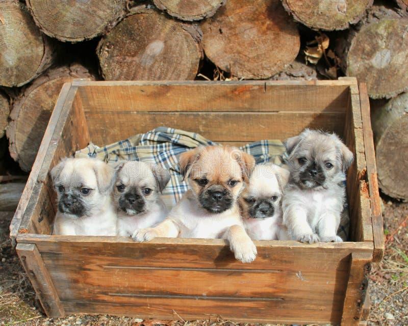 Puppyfamilie stock foto's