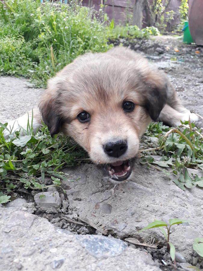 Puppyhond royalty-vrije stock foto's