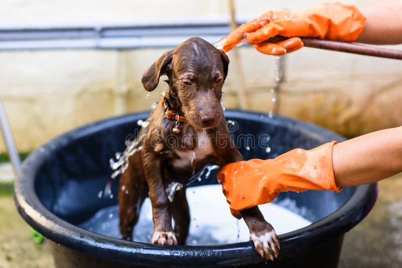 puppyhond die een bad nemen stock afbeelding