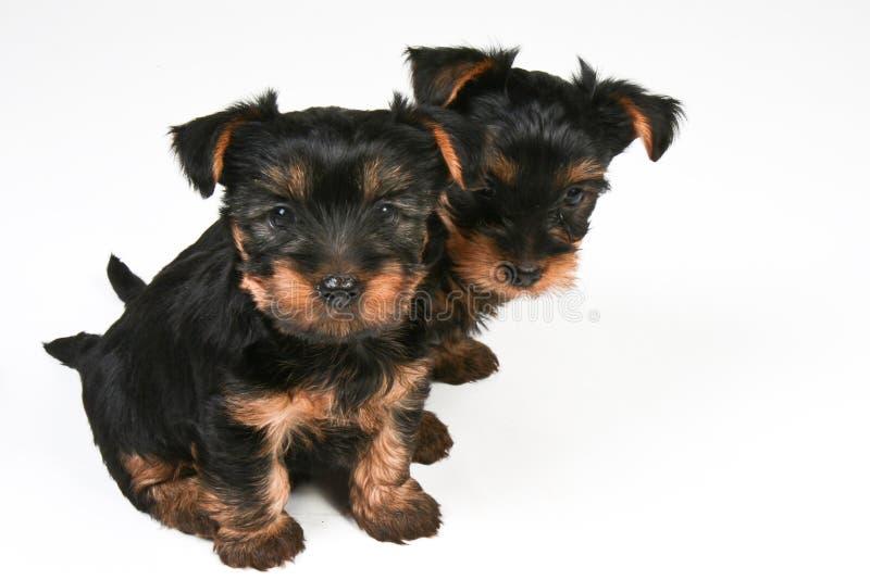 Puppys стоковые фото