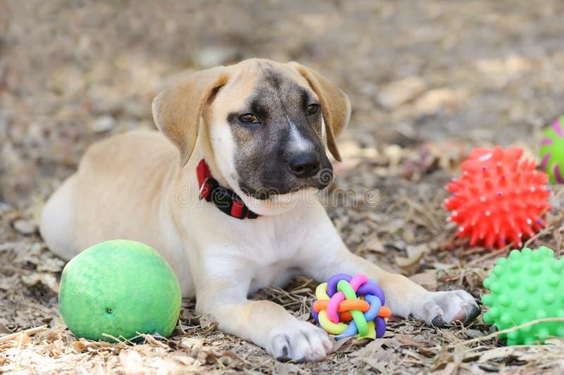 Puppyspeelgoed royalty-vrije stock foto's