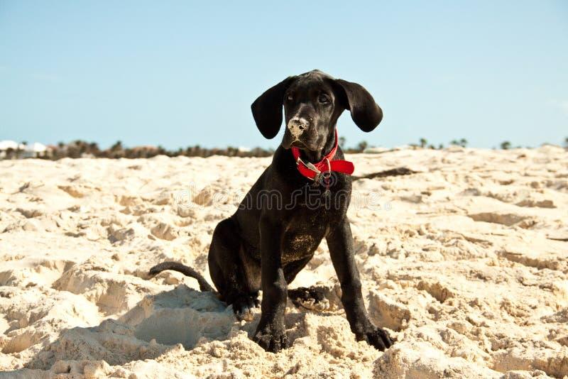 Puppyzitting op het strand stock foto