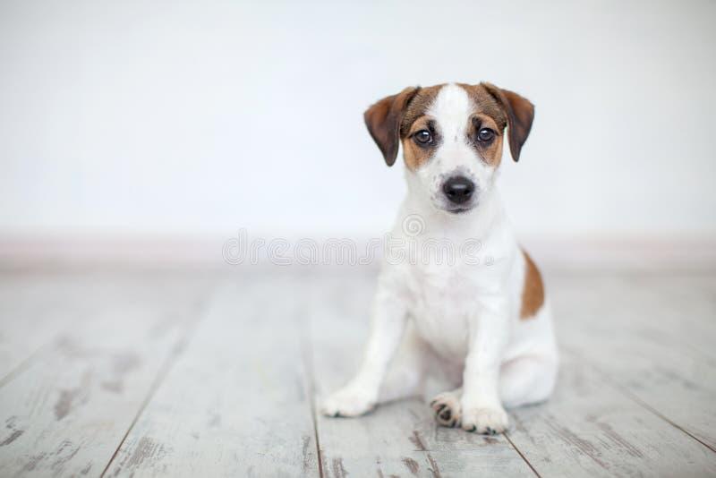 Puppyzitting op vloer stock foto