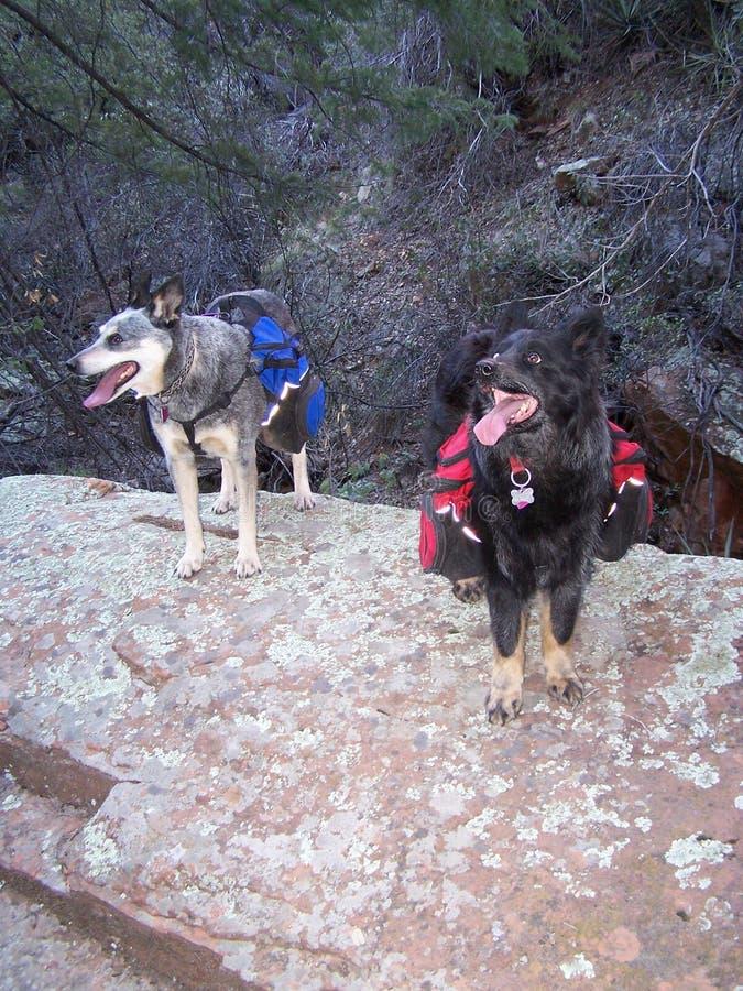 Pups Free Public Domain Cc0 Image