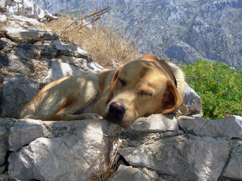 Pupy asleep royalty free stock images