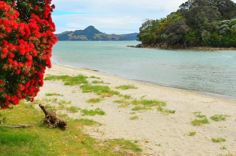 Purangi, plage de cuisiniers, Whitianga, Coromandel, Nouvelle-Zélande photo stock