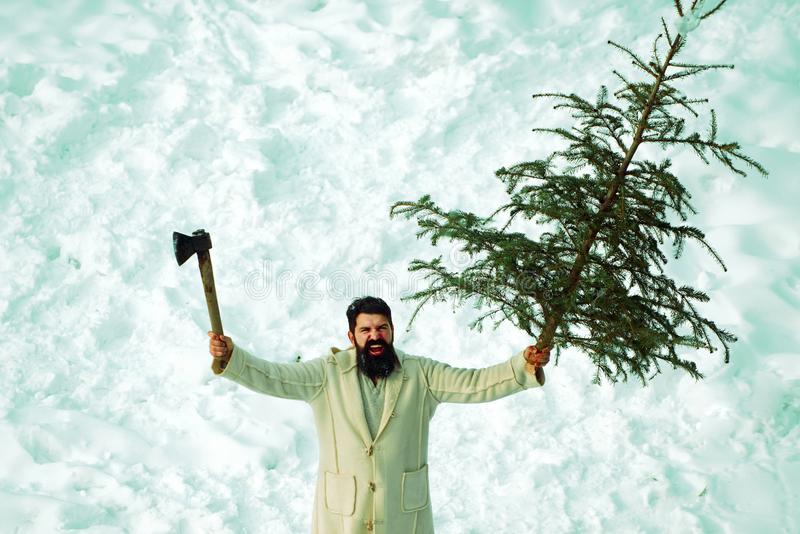 Purchase and delivery of conifer on Christmas Eve. Winter emotion. A handsome young man with a beard carries a Christmas royalty free stock photography