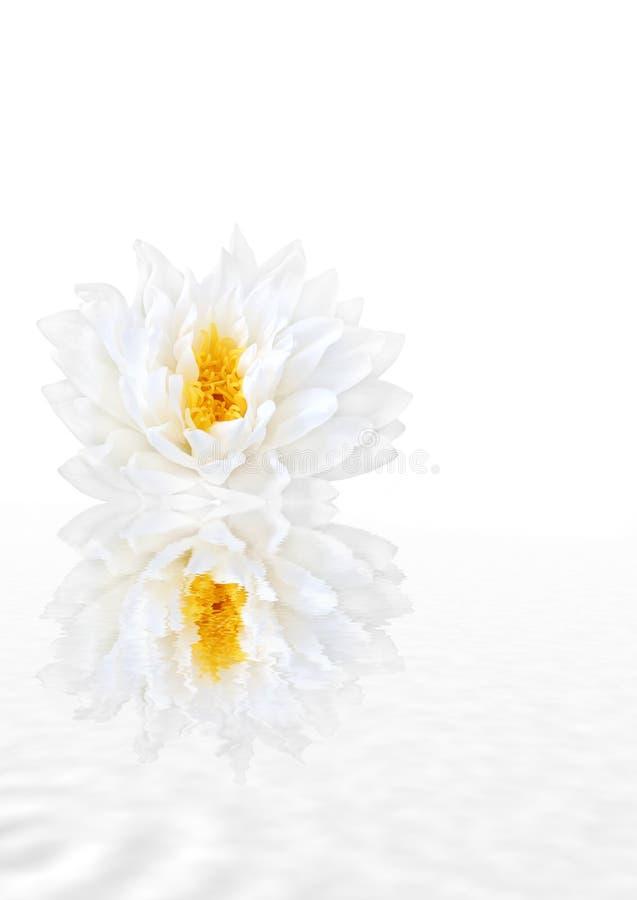 Free Pure Beauty Stock Photo - 4553090