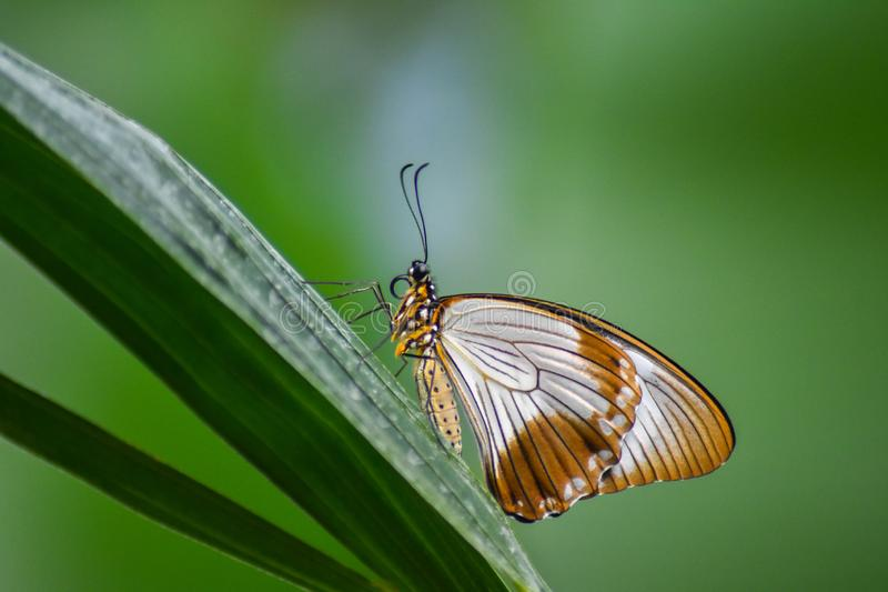 Pure and Elegant Butterfly stock photos
