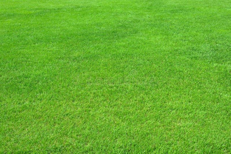 Pure empty green grass field cut royalty free stock photo