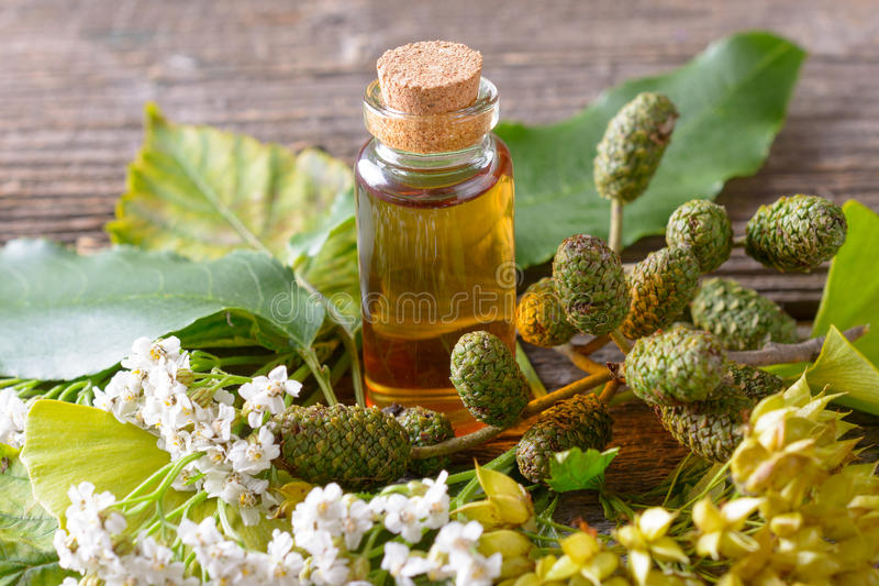 Pure essential oil. Pure herbal essential oil in glass bottle on woden desk with ginkgo leaf and alder cones royalty free stock image