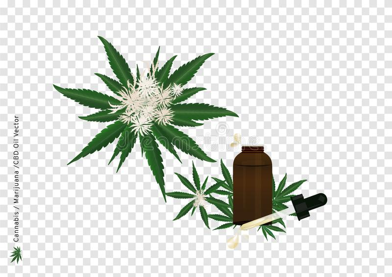 Pure extract oil from Cannabis or Marijuana flower and leaf with CBD strain on transparency background for medical treatment, illu. Stration for advertising and vector illustration