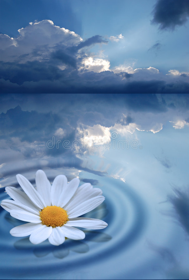 Download Pure Flower on water stock image. Image of blue, nature - 2754539
