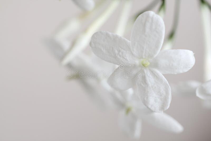 Pure fragrance stock photo