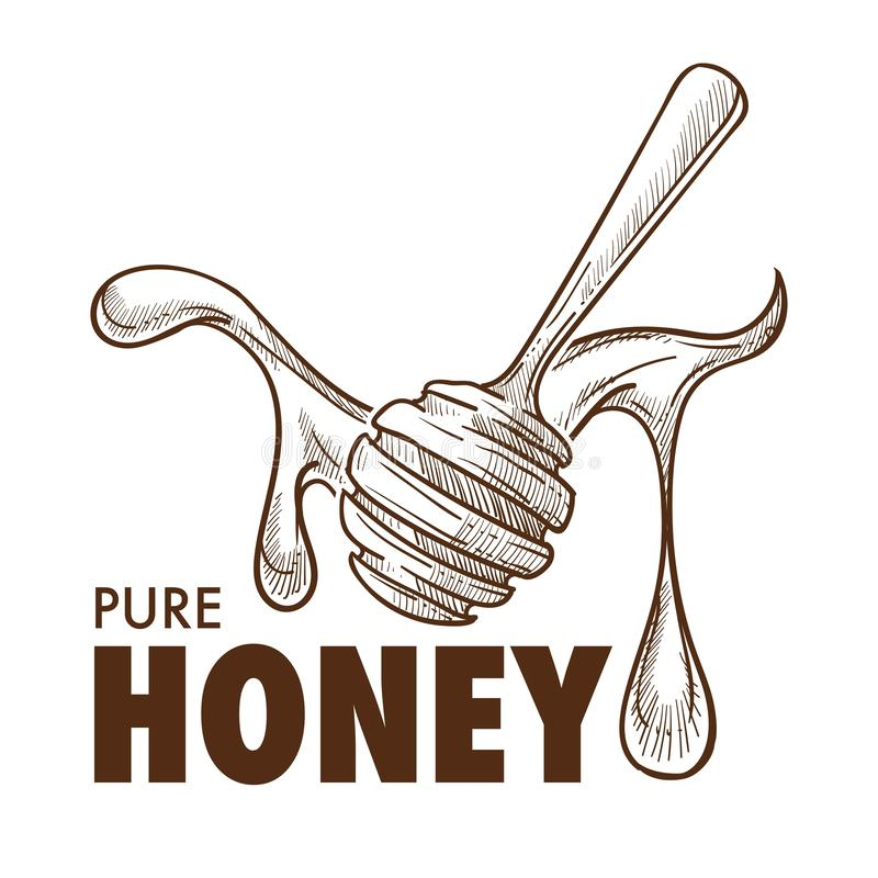 Pure honey dripping around a dipper sketch art with text stock illustration