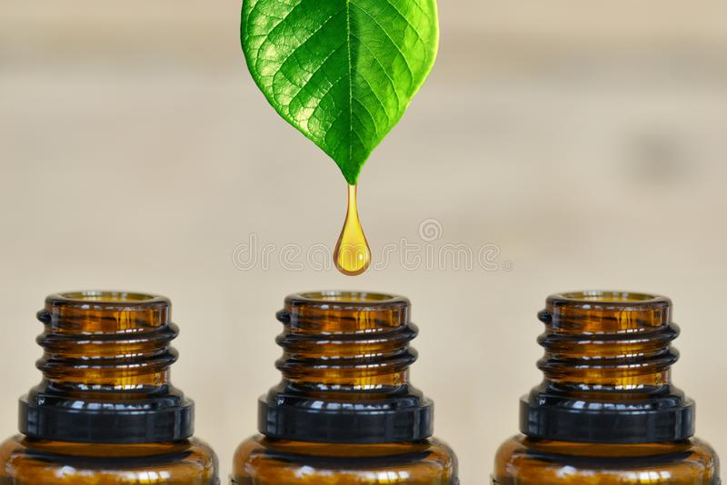 Pure and organic essential oil dripping from a green plant into a dark amber bottle royalty free stock photo