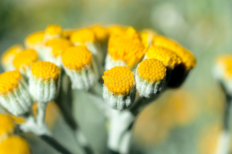 Download Pure pollen stock image. Image of pieces, photo, pollen - 31826171
