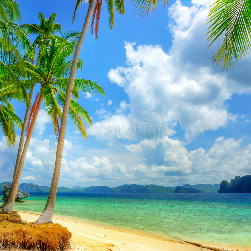 Pure tropics stock image