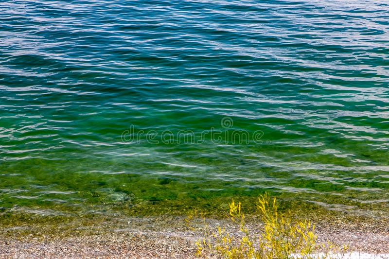 Pure wavy greenish-blue Baikal water with a yellow plant on the shore stock photo