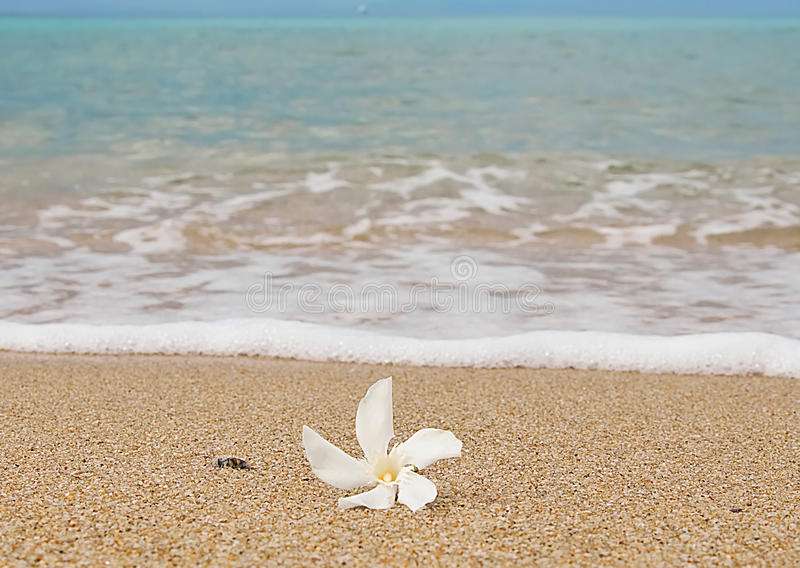 Pure white flower in the sand at the azure sea