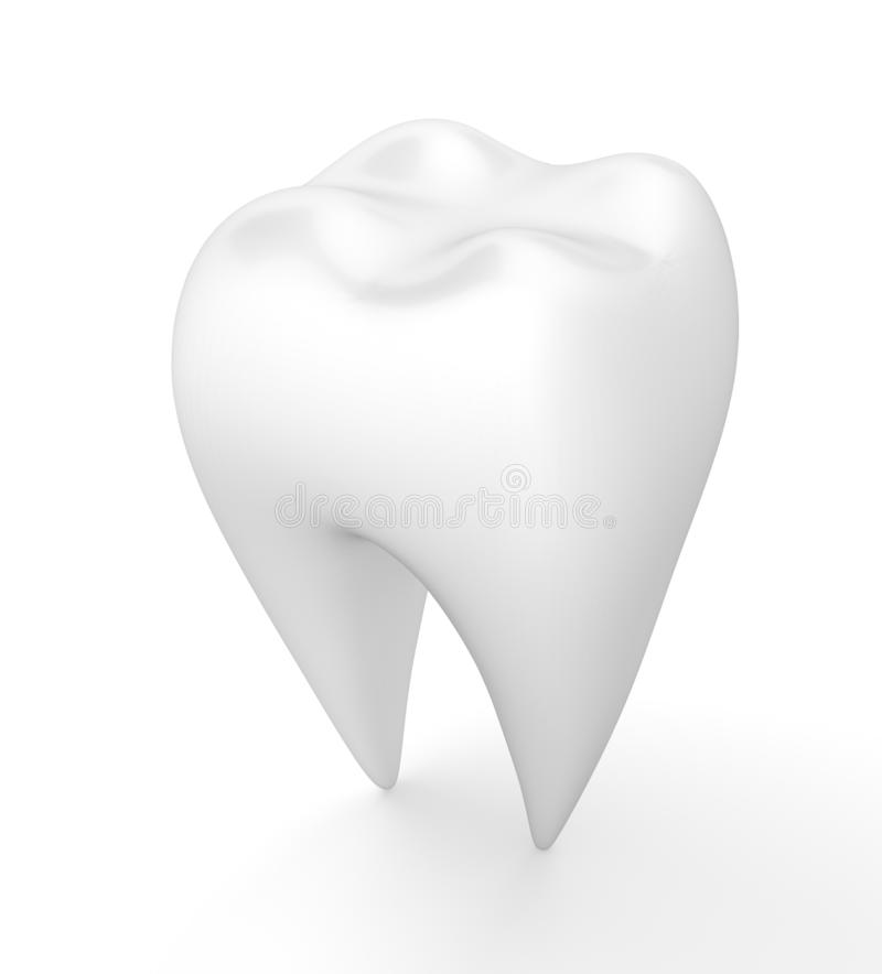 Clean human tooth vector illustration